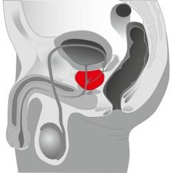 Prostatavibrator »O-Boy«, 10,5 cm, mit Reiznoppen